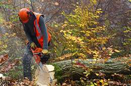 arborist workers comp insurance quotes
