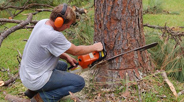 arborist workers compensation insurance quote