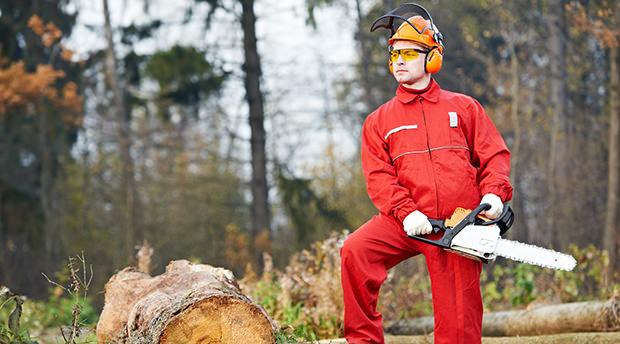 arborist business insurance